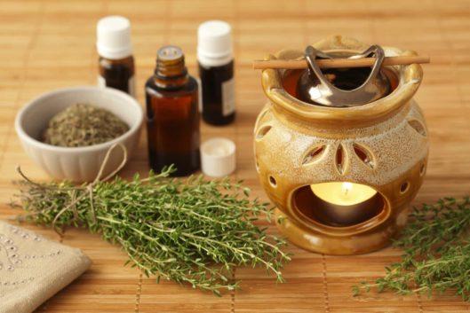 Cỏ xạ hương - Thảo dược quý trị hô hấp