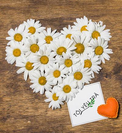 Tiêu hóa tốt và cải thiện sức khỏe tim mạch với trà hoa cúc