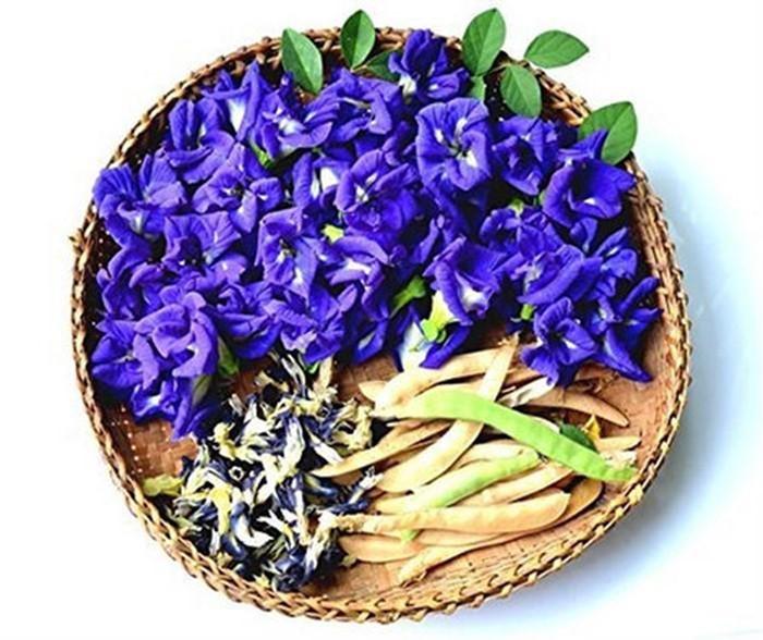 Vì sao nên uống trà Hoa đậu biếc?